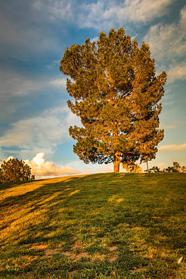 Lenz Wall Art - Photograph - Golden Tree by George Lenz