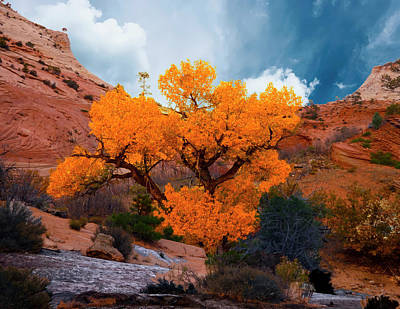 Photograph - Golden Tree In Zion by Marcia Socolik