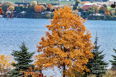 Photograph - Golden Tree by William Norton