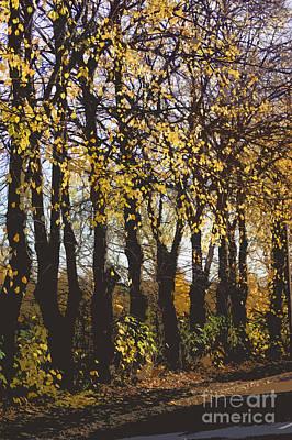 Rake Digital Art - Golden Trees 1 by Carol Lynch