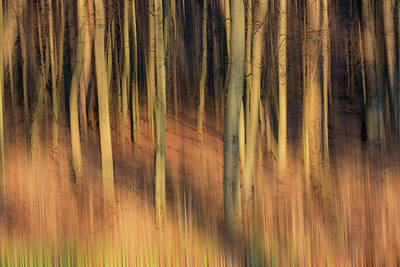 Photograph - Golden Forest Of Trees Abstract  by Patti Deters