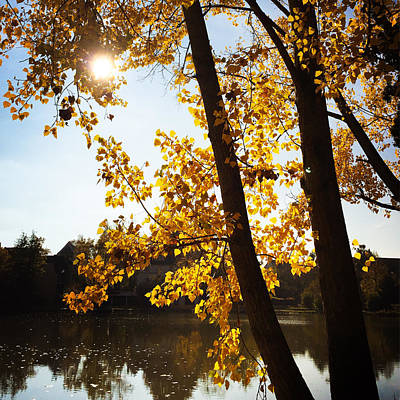 Landscapes Photograph - Golden Trees In Autumn Sindelfingen Germany by Matthias Hauser