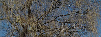 Photograph - Golden Treetop by Anne Cameron Cutri