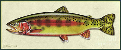 Painting - Golden Trout Id by Jon Q Wright