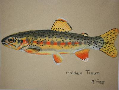 Pastel - Golden Trout by Michele Turney