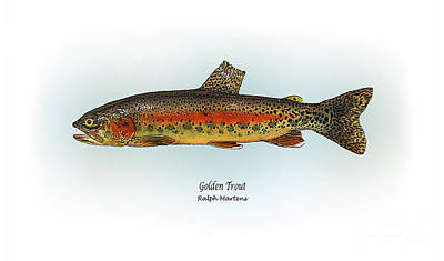 Trout Drawing - Golden Trout by Ralph Martens