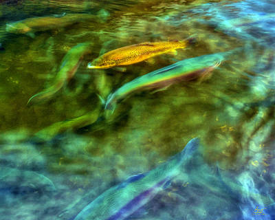 Photograph - Golden Trout by Sam Davis Johnson