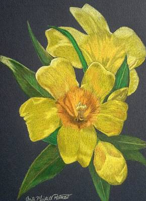 Drawing - Golden Trumpet Flower - Allamanda Vine by Anita Putman