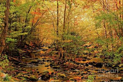 Photograph - Golden Twin Creek by Geraldine DeBoer