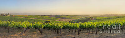 Photograph - Golden Vineyard  Panorama by Ray Warren