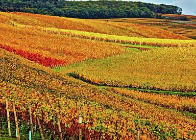 Taunus Photograph - Golden Vineyards by Daniel Koglin