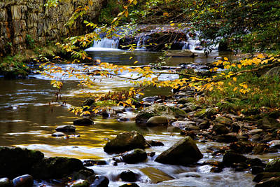 Photograph - Golden Waters by Lana Trussell
