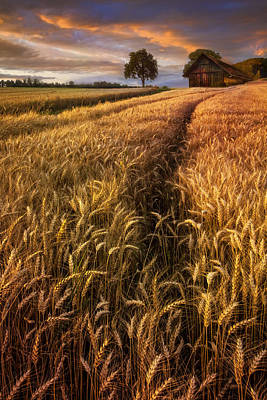 Photograph - Golden Waves Of Grain by Debra and Dave Vanderlaan