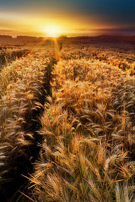 Photograph - Golden Wheat Dreamscape by Debra and Dave Vanderlaan