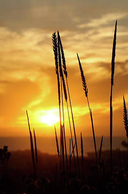 Photograph - Golden Wheat by Kip Krause