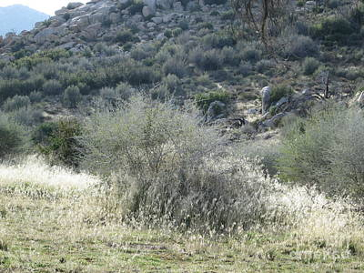 Photograph - Golden Wild Grass At The Pinnacles In The San Bernardino Mountains by Julia Hanna