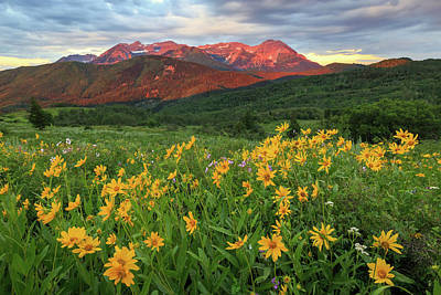 Photograph - Golden Wildflowers In The Wasatch Back. by Johnny Adolphson