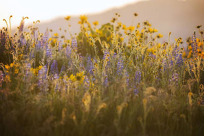 Photograph - Golden Wildflowers by Jon Ares