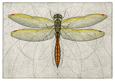 Dragonflies Mixed Media - Golden Winged Skimmer by Charles Harden