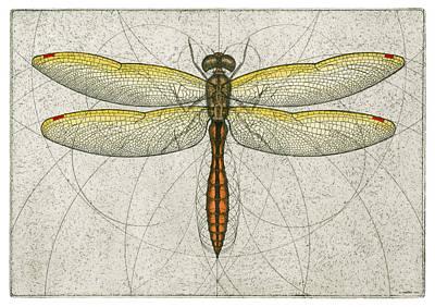 Golden Winged Skimmer Art Print