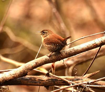 Digital Art - Golden Winter Wren by Fred Zilch
