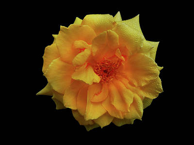 Photograph - Golden Wonder by Mark Blauhoefer
