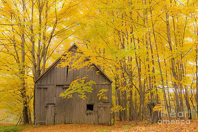 Photograph - Golden Woods Barn by Alan L Graham