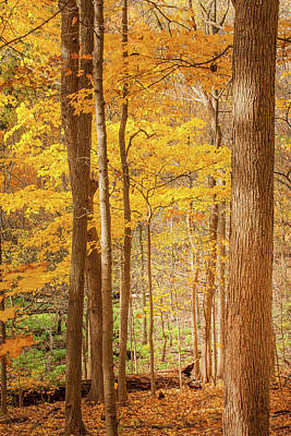 Photograph - Golden Woods by Joni Eskridge
