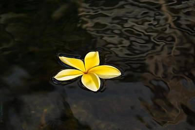 Photograph - Golden Yellow - Sparkling Plumeria Blossom In Dark Waters by Georgia Mizuleva