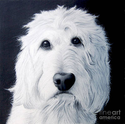Drawing - Goldendoodle Portrait by John Small