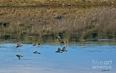 Photograph - Goldeneyes In Flight-signed-#4088 by J L Woody Wooden