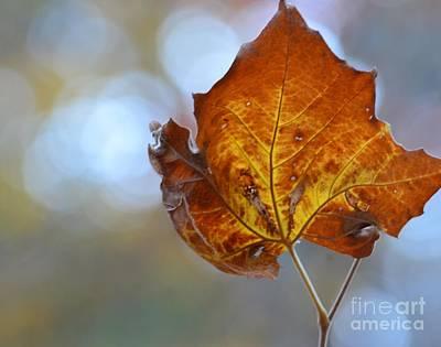 Dappled Light Photograph - Goldenleaf by Maria Urso