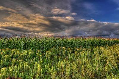 Photograph - Goldenrod And Corn by Dale Kauzlaric