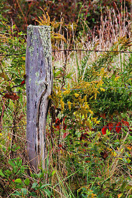 Photograph - Goldenrod And Fenceposts by HH Photography of Florida