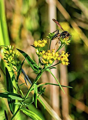 Goldenrod And Wasp - Paint Art Print by Steve Harrington