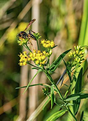 Goldenrod And Wasp Art Print by Steve Harrington