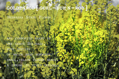 Photograph - Goldenrod By Definition Nebraska by Sharon Popek