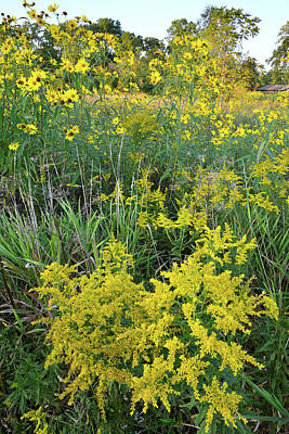 Photograph - Goldenrod Galore At Brookdale by Ray Mathis