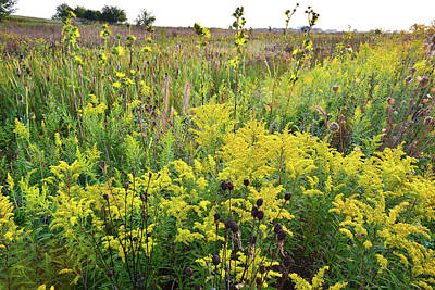Photograph - Goldenrod Galore At Kishwaukee Headwaters by Ray Mathis