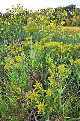 Photograph - Goldenrod Garden At Brookdale by Ray Mathis