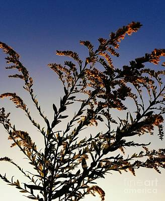 Photograph - Goldenrod Glow by Maria Urso