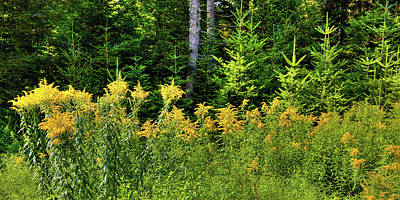 Photograph - Goldenrod In The Adirondacks by David Patterson