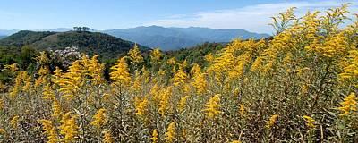 Goldenrod Mountain View Original