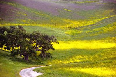 Goldenrod Oak Santa Ynez California 2 Art Print by Barbara Snyder
