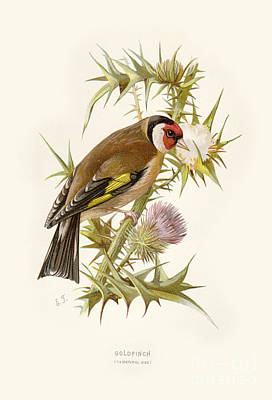 Digital Art - Goldfinch Restored by Pablo Avanzini