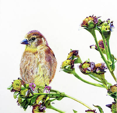 Goldfinch Drawing - Goldfinch 2 by Jennifer Morrison