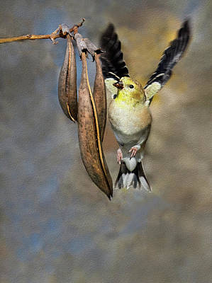 Photograph - Goldfinch And Seedpods by Art Cole