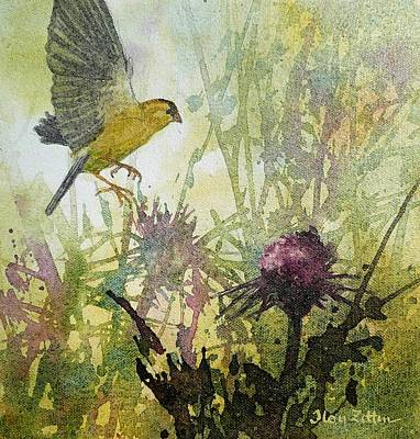 Wall Art - Painting - Goldfinch And Thistle by Floy Zittin
