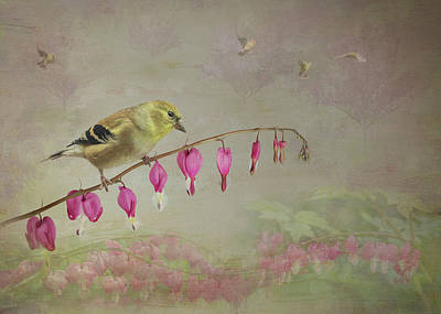 Photograph - Goldfinch Bleeding Heart by Patti Deters