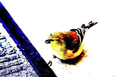 Goldfinch Print by Charrie Shockey